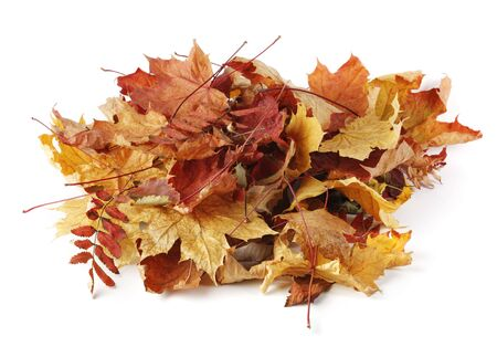 pile of leaves: A heap of different autumn leaves on white