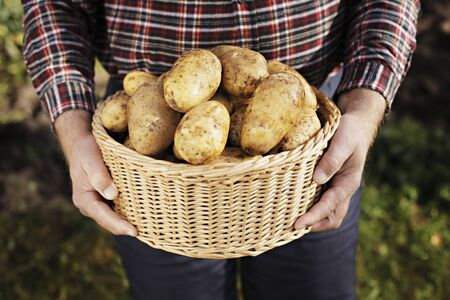 Farmer holding a basket full of harvested potatoes Stock Photo - 5777390