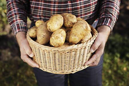 harvests: Farmer holding a basket full of harvested potatoes
