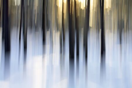 Abstract winter forest scene, intentional vertical blur done in-camera. photo