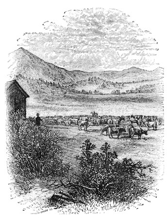 virtue: Cattle on prairie at rocky mountains. Illustration originally published in Hesse-Warteggs Nord Amerika, swedish edition published in 1880. The image is currently in Public domain by virtue of age. Stock Photo