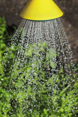 trickles: Watering with a watering can Stock Photo