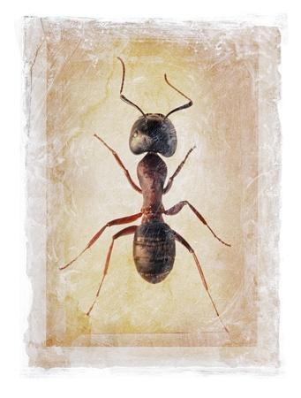 photomanipulation: Grunge dirty photomanipulation of an ant.