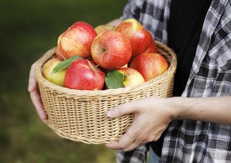 harvest basket: Man holding a basket full of red ripe apples. Stock Photo