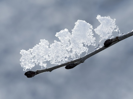 Early spring / late winter image of tree branch with melting snow.