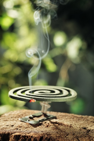 Insect repellent mosquito coil smoking.