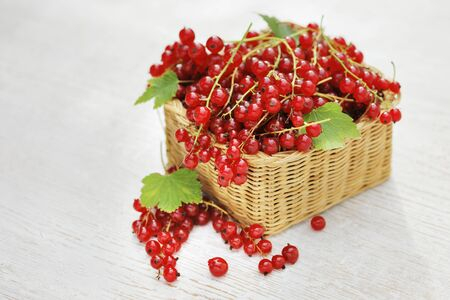red currants: Red Currants in a small wicker basket. Stock Photo