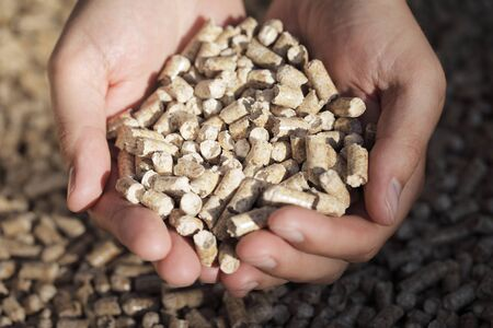 Alternative fuel: Pellets made from industrial wood waste. Short depth-of-field. photo