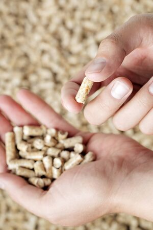 wood pellets: Man holding a wood pellet between his fingers. Wood pellets are made from wood waste and used as renewable fuel. Stock Photo
