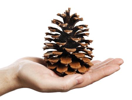 pomme de pin: Homme tenant un grand cône de pin à la main.