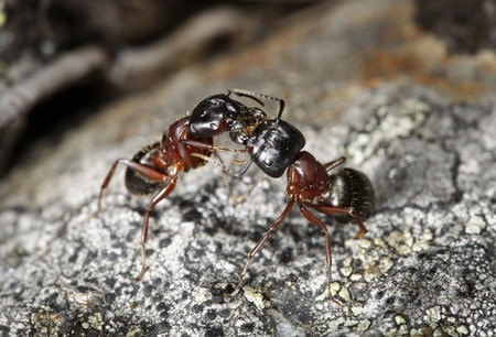 ants: Ants communicating through chemical means.