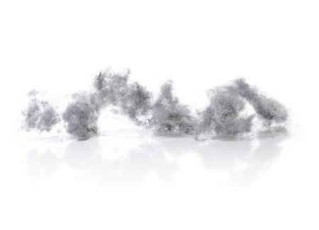 흰색 반사 배경에 먼지 토끼. 스톡 콘텐츠