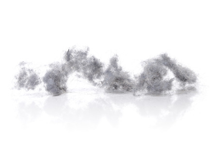Dust bunnies on white reflecting background. Stock Photo
