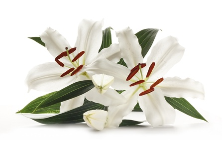 Pair of white lillies popular at weddings and funerals, isolated on a white background  photo