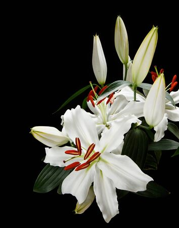 Bunch of white lilies popular at weddings and funerals, isolated on a black background  photo