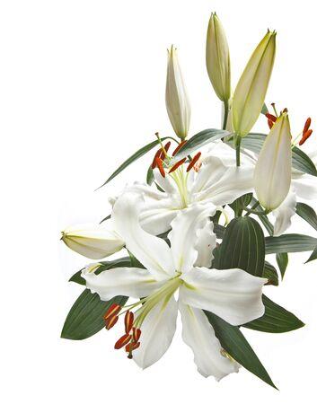 lirio blanco: El manojo de lirios blancos populares en las bodas y funerales, aislado en un fondo blanco