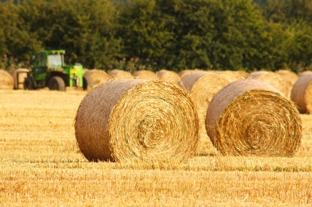 Freshly rolled golden hay bales in farmers recently harvested agricultural field Standard-Bild