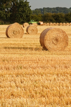Freshly rolled golden hay bales in farmers recently harvested agricultural field Stock Photo - 14856223