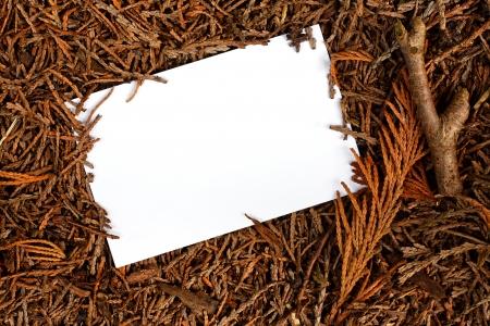 forest management: Rustic Pine forest floor frame, good border for landscaping, logging, carpentry, forestry or woodland management. Stock Photo
