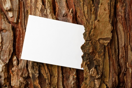 Tree Bark frame border with copy space photo