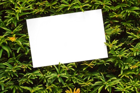 Topiary bush frame or hedge border good for country houses, stately homes, Garden centres or landscape designers photo