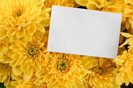 Chrysanthemum Floral bouquet background with blank greeting card to insert your marketing message or florists branding photo