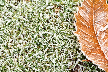 frozen grass background texture with orange frosty leaf for compositional contrast Stock Photo - 16908703