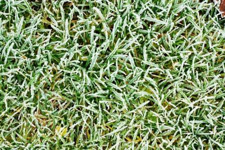 Frosty frozen grass background texture Stock Photo - 16908704