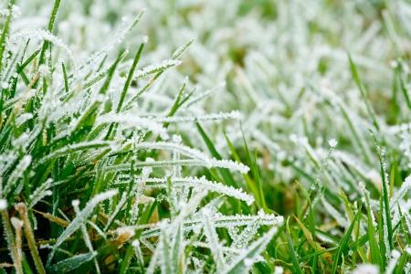 Frosty frozen grass background texture
