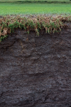 coastal erosion: cross section of a salt marsh field with exposed soil following coastal erosion or landslide