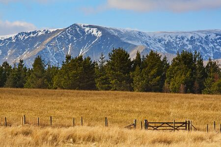 sun drenched: snow capped rocky mountains set behind fur trees with field or prairie in front