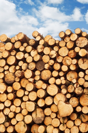 lumber industry: woodpile of freshly cut lumber stacked on the back of a truck for the timber industry