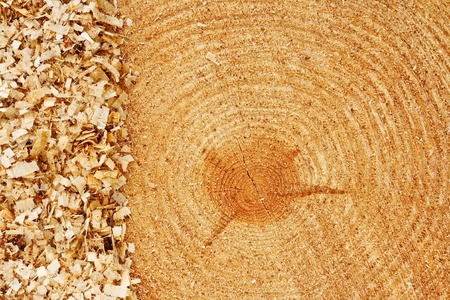 forestry industry: Growth rings on freshly cut fir tree with saw dust border good background for the lumber industry Stock Photo