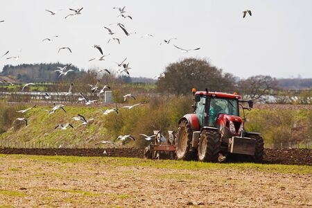 ploughing: farming scene of a farmer ploughing a field ready for new crops in spring with sea birds feeding on the exposed worms