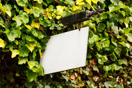 customise: Traditional wrought Iron blank sign surrounded by an ivy creeper suitable for cusomising to any rural tourism industry