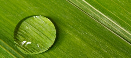 Close up of a droplet of dew on a leaf background great for beauty products and a symbol of purity photo