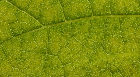 Macro of Leaf detail great background for tropical forests or travel to the tropics photo