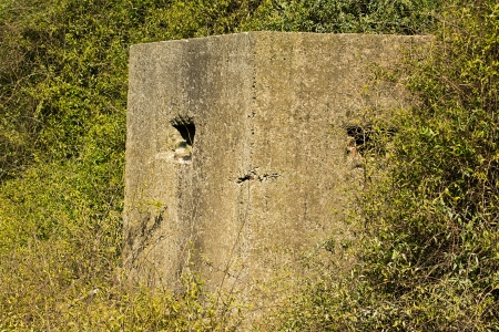 pillbox: Old ruin of a an allied world war two bunker in the uk commonly called a pillbox
