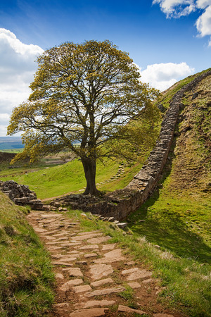 Sycamore Gap part of Hadrians Wall in Northumberland near the Scottish Borders