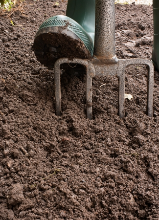 Gardener digging the earth over with a garden fork to cultivate the soil ready for planting in early spring Stock Photo