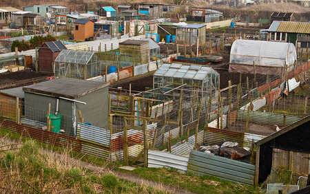 hobbyist: Group of Allotment plots where land is parcelled up for gardeners to grow there own vegetables as a hobby