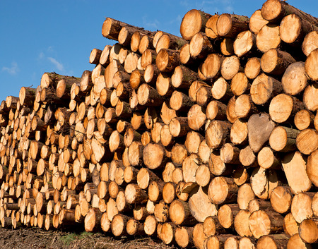 forestry industry: woodpile of freshly cut lumber awaiting distribution after seasoning for the forestry industry Stock Photo