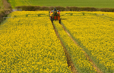 increasingly: Farmer spraying his rape seed crop also known as canola and increasingly used for bio fuel production Stock Photo