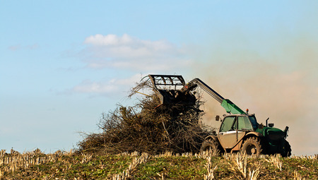 Famer burning crop residue on bonfire to dispose of waste plant material and help kill insects.