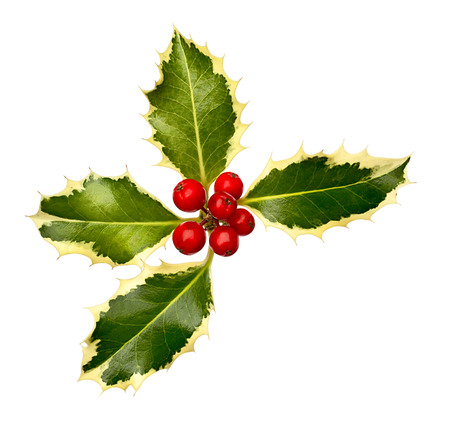 christmastime: Christmas Holly Leaves and berries corner item for festive borders at christmastime. Stock Photo