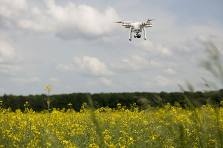 Dron in action. Rape field scenery. Summer time. Backgrounds concept.