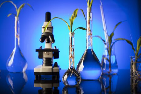 Biotechnology and floral science theme. Experimenting with flora in laboratory. Stock Photo