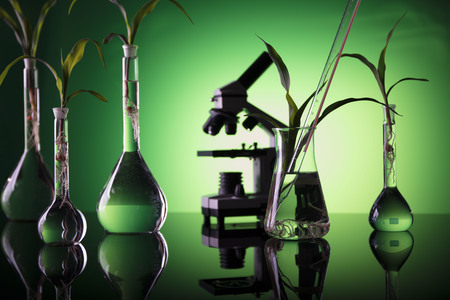 Biotechnology. Experimenting with flora in laboratory.