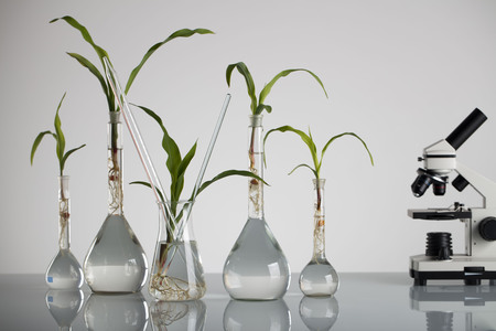 cultivate: Plants in laboratory. Biotechnolgy concept. Stock Photo