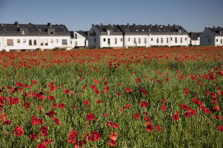 Poppy field in the town. Housing estate on the outskirts of the town. Stock Photo